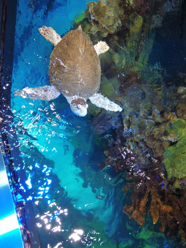 New England Aquarium.