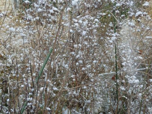 Fennel seeds dusted in snow.